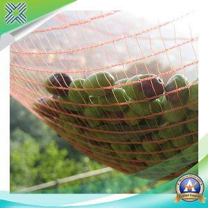 Green Olive Plastic Netting for Collecting Fruits pictures & photos