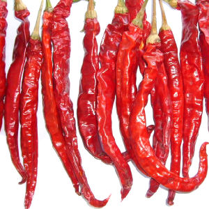 New Crop Good Quality Dried Hot Red Chilli pictures & photos