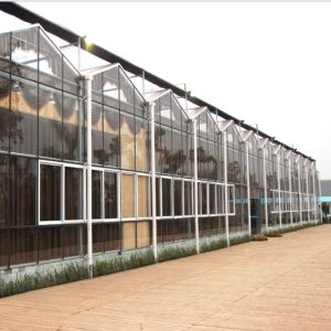 The High Quality Agricultural Multispan Glass Greenhouse pictures & photos