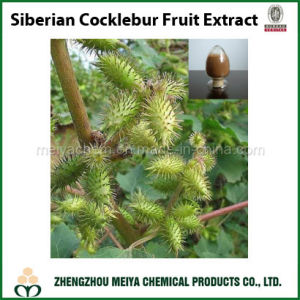 Factory Supply Siberian Cocklebur / Xanthium Strumarium Fruit Powder Extract pictures & photos