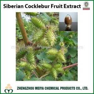 Factory Supply Siberian Cocklebur / Xanthium Strumarium Fruit Powder Extract pictures & photos