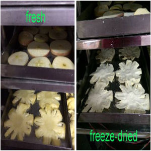 Hot Sale Vegetable and Fruit Vacuum Freeze Drying Machine pictures & photos