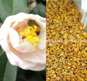 Top Puer Tea Bee Pollen, King Pollen, Rare N Precious, No Antibiotics, No Pesticides, No Pathogenic Bacteria, Anticancer, Prolong Life, Bee Pollen pictures & photos