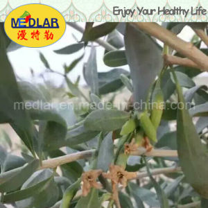 Medlar Lbp Organic Herbs Red Gojiberry pictures & photos