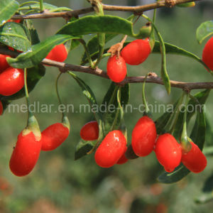 Medlar Dried Ningxia Red Organic Wolf Berry pictures & photos