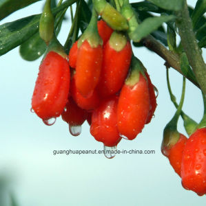 Perfect Hot Sale Dried Goji Berry From China pictures & photos