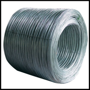 Q195 Bwg20 Galvanized Iron Wire pictures & photos