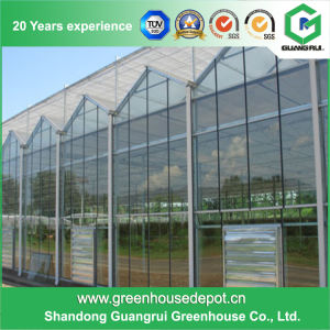Good Quality Glass Greenhouse for Hydroponic Growing Systems pictures & photos