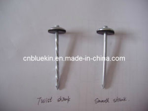 Umbrella Head Roofing Nails (R-4101655) pictures & photos