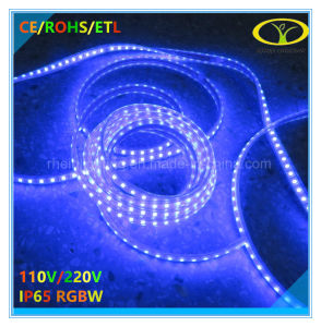 Ce RoHS 220V IP65 RGBW LED Strip with Remote Control pictures & photos