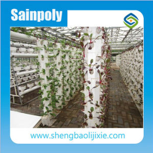 The Sainpoly Greenhouse Hydroponics System for Agriculture Use pictures & photos