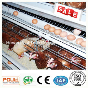 Egg Layer Chicken Cage with Automatic Water Supply System pictures & photos