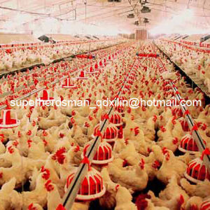 High Quality Poultry Feeders and Drinkers for Chicken Farm pictures & photos