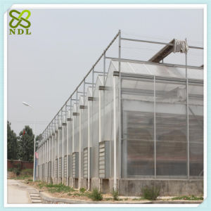 Venlo Strawberry Green House with Thermal Blanket pictures & photos