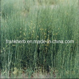 Natural Ephedra Herb Powder pictures & photos