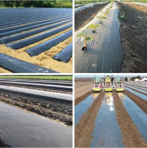 Agriculture Black Plastic Film Transparent Film Transparent PE Film pictures & photos