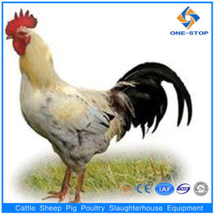 High Quality of Automatic Poultry Slaughter Machine pictures & photos