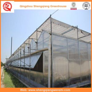 Agriculture Multi Span PC Sheet Greenhouse for Vegetables/Flowers pictures & photos