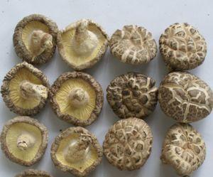 Shiitake Mushrooms White Flower Shiitake pictures & photos