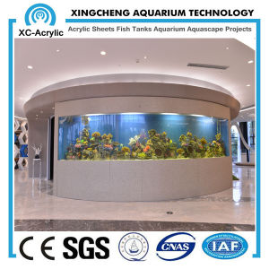 Large Acrylic Aquarium Wall pictures & photos