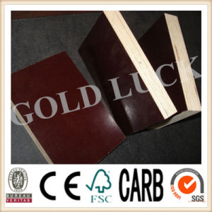 Qingdao Gold Luck Pine Core Plywood pictures & photos