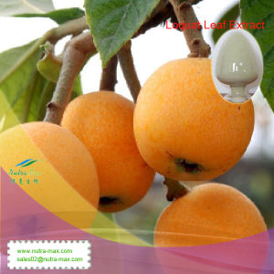 100% Natural Loquat Leaf Extract (Ursolic Acid 25%~98%) -Nutramax Supplier