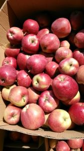 Red Star Apple of China with Good Quality/ Fresh Fruits pictures & photos