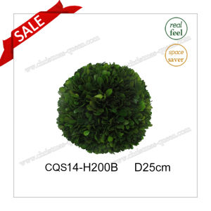 D25cm Natural Boxwood Leaves Craft Wedding Decoration pictures & photos