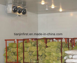 Cold Room Refrigeration Unit for Fruit and Vegetable Meat pictures & photos