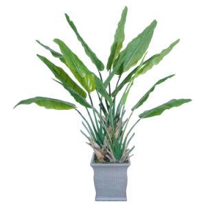 Evergreen Artificial Banana Bonsai Tree pictures & photos