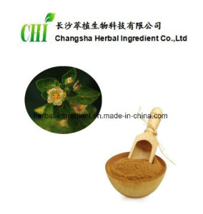 Sida Cordifolia Extract 10% Alkaloid for Foods and Supplement pictures & photos