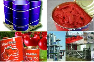 Brix 36-38% Tomato Paste in Drum pictures & photos
