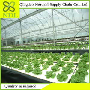 High Performance Price Ratio Agricultural Dual Row Hydroponics System Greenhouse Planting System pictures & photos