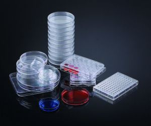 CE Approved 55*15mm Disposable Plastic Culture Petri Dish pictures & photos