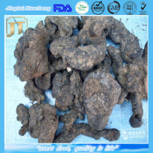 100% Natural Polyporus Umbellatus /Chinese Herbal Zhuling Extract pictures & photos