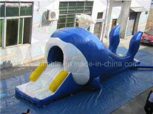 Cheap Inflatable Whale Slide, Commercial Inflatable Theme Slide Rental pictures & photos