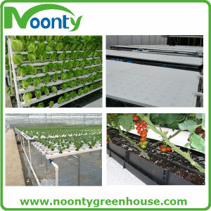 Hydroponic Vegetable Growing System pictures & photos