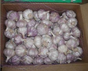 5.0 - 5.5cm, 5.5 - 6.0cm, 6.0 - 6.5cm, 6.5cm Normal White Garlic pictures & photos