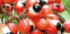 CAS No 58-08-2 Lose Weight 10% 20% Guarana Extract pictures & photos