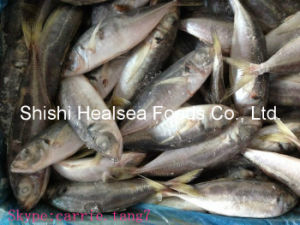 Avaiable Good Horse Mackerel with Competitive Price pictures & photos