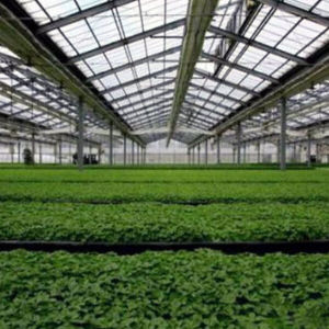 China Hot Sale Used Agricultural Commercial Vegetable Greenhouse pictures & photos