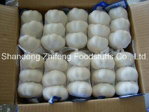5.5cm Chinese Pure White Fresh Garlic pictures & photos