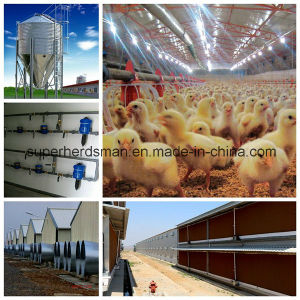 Modern Designed Full Set Automatic Poultry Farm Equipment pictures & photos