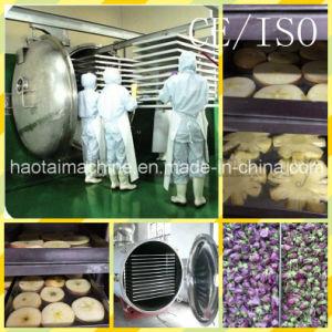 Vacuum Freeze Dryer for for Food, Fruits, Vegetables, Flowers and Lyophilizer with Factory Price pictures & photos