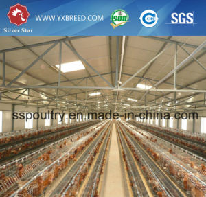 New Products Poultry Layer Container Poultry Farm Business Plan pictures & photos