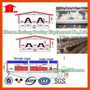 H Type Layer/Broiler Breeder Chicken Rearing Equipment Cage pictures & photos