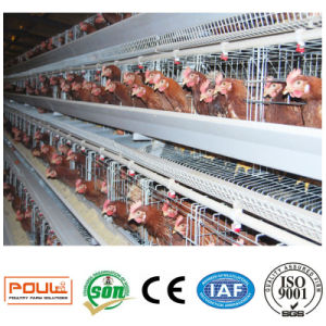 The Chicken Cages of Layer (Egg) From Henan Poultech pictures & photos