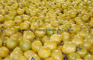 Fresh New Crop Honey Pomelo with Good Price pictures & photos