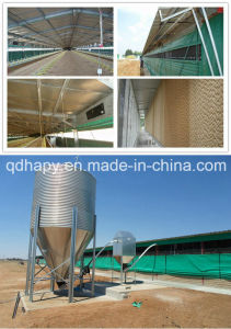 Natural Ventilation Poultry House in Tropical Area pictures & photos
