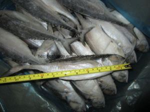 Frozen Hard Tail Scad /Horse Mackerel Fish pictures & photos